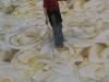 Bei der Arbeit am Rosenprospekt